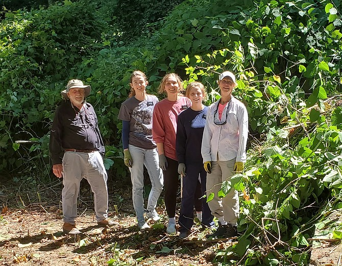 Kit Britton, coordinator of the Japanese knotweed clean-up, with three Mormon volunteers and Jill Barker, Park Steward at Upton Hill Regional Park, attack the Japanese knotweed along the Potomac River on Saturday, June 19.