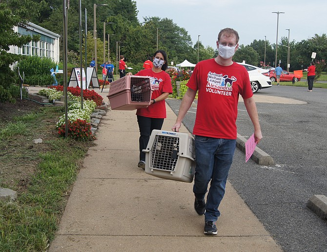 Volunteers ferry pets from cars to the AWLA shelter at a drive-in vaccine clinic.