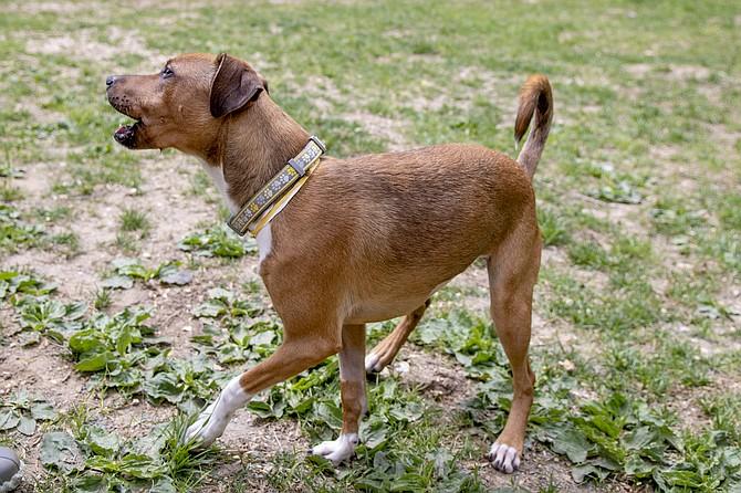 Alexandria's amended ordinance on dog barking became effective on July 6.